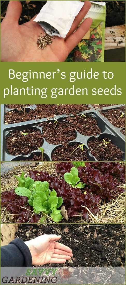 Edible Garden Ideas edible herb wall Planting Garden Seeds A Beginners Guide To Growing Plants From Seed