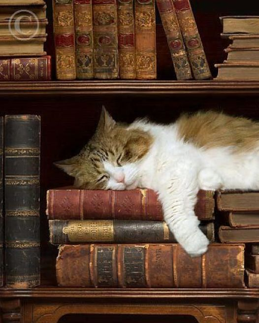 """Places to look: behind the books in the bookshelf, any cupboard with a gap too small for any cat to squeeze through, the top of anything sheer, under anything too low for a cat to squash under and inside the piano."" ― Roseanne Ambrose-Brown"