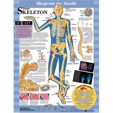 13 Best Anatomy And Science For Kids Images On Pinterest Human