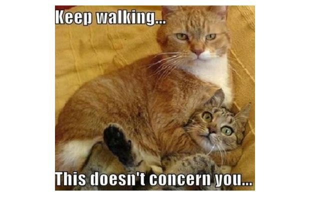 Gallery: 15 Hilariously Inappropriate Animal Memes