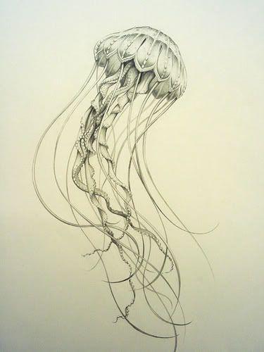 jellyfish tattoo - Google Search