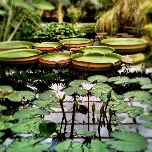 Zen Garden Want To Have This Pond Flowers And Gardens