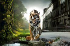 Tiger Wallpaper 3d Wallpapers High Resolution for HD Wallpaper Desktop 2560x1600 px 551.64 KB