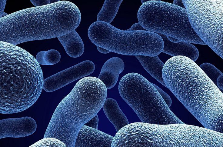 I migliori amici dell'uomo: i batteri