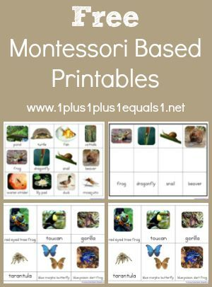 1+1+1=1..Montessori Printables- Lots of Units from rainforest animals/bugs/tools, fruit, nature, ocean, and much much more