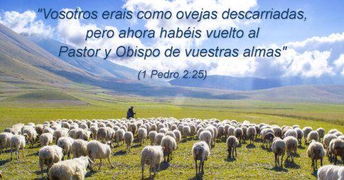 Los hombres, como las ovejas, tenemos tendencia a vagar sin saber a dónde vamos. Cristo, el Buen Pastor, nos amó, buscó, y nos salvó cuando estábamos perdidos. Hoy nos guía, cuida, corrige, vigila y gobierna. ¡Estamos en buenas manos!. #mensajededios2 #oroporti