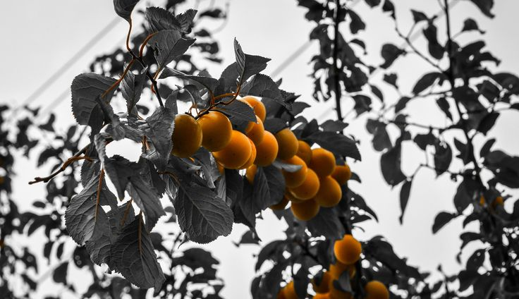 fruits of the sun by Marius Fechete on 500px