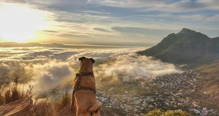 The Best Dog-Friendly Hiking Trails in Cape Town: