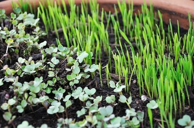 Tip #6: Grow Microgreens | 10 Gardening Tips and Tricks You Can Use Right Now!