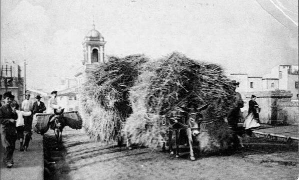 Mulos cargados de paja pasando por el puente de Triana. Año 1890.