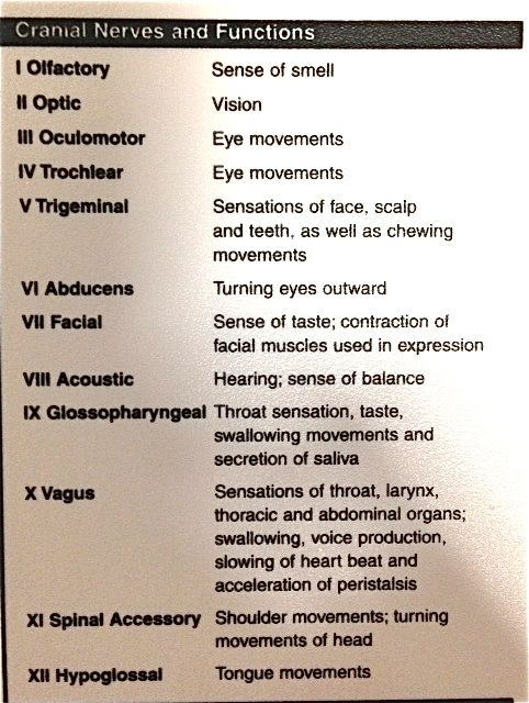 Cranial Nerves & Function