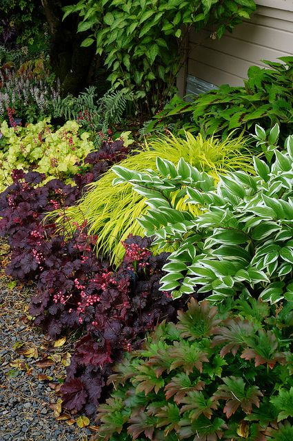 Beautiful shade combo -- Persicaria (probably 'Lance Corporal'), golden Hakone grass, purple-leaf Heuchera, variegated Solomon's seal, Mukdenia rossii