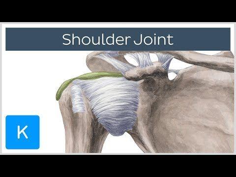 Best 25+ Human joints ideas on Pinterest | Shoulder joint ... - photo#7