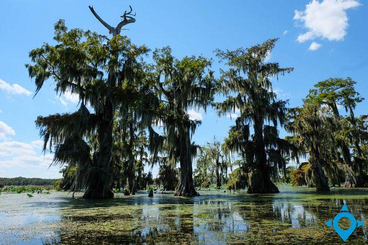 Les bayous en Louisiane http://www.trip-usa-canada.com/mini-road-trip-louisiane/