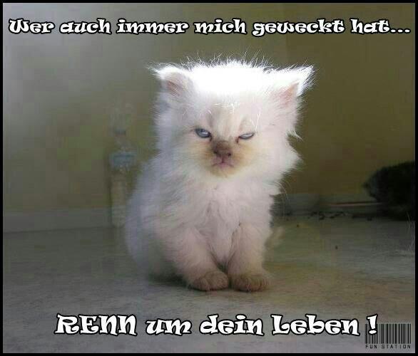 guten morgen zusammen und einen schönen tag - http://guten-morgen-bilder.de/bilder/guten-morgen-zusammen-und-einen-schoenen-tag-248/