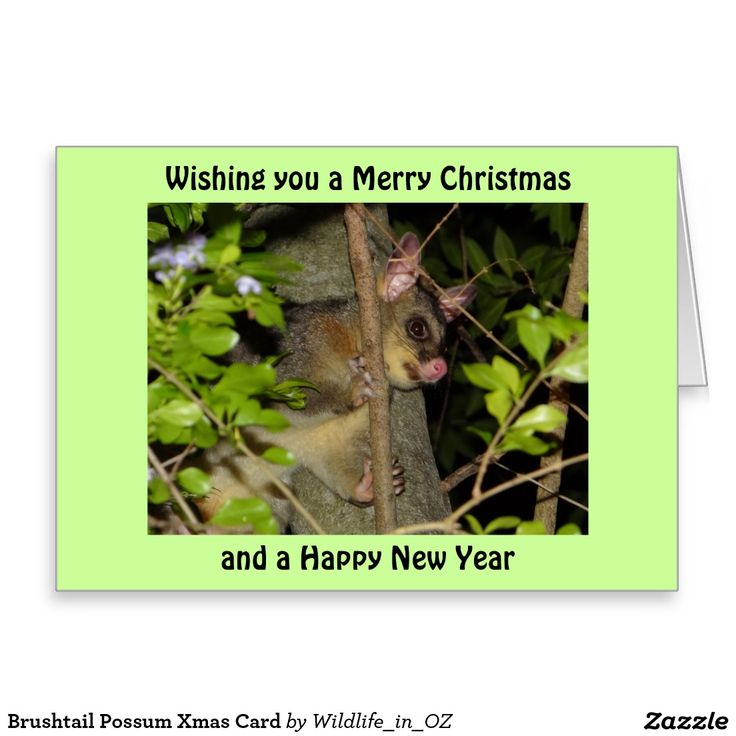 Brushtail Possum Xmas Card - Australian Wildlife.  Click on photo to view item then click on item to see how to purchase that item.