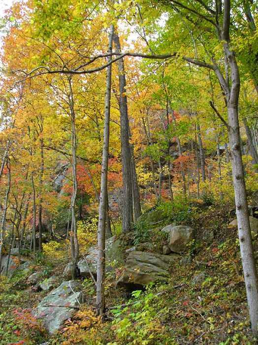 Red River Gorge Trail Guide