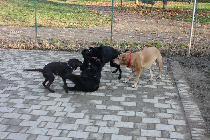 20/11/2014 - Torino con Ollie, Peja e Rudy