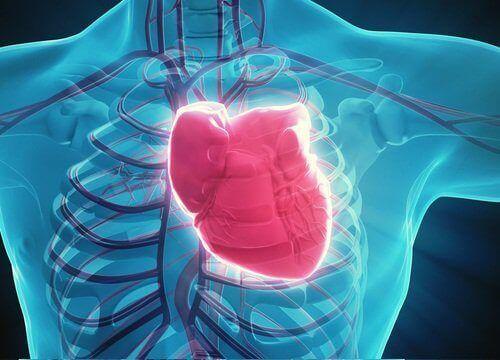 Niedrożność tętnic wieńcowych – dbaj o zdrowie!
