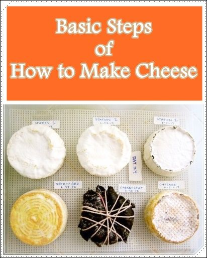 Basic Steps Of How To Make Cheese - Homesteading - The Homestead Survival .com