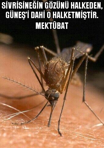 Sivrisineğin gözünü halkeden, Güneş'i dahi o halketmiştir.   Risale-i Nur/Mektûbat