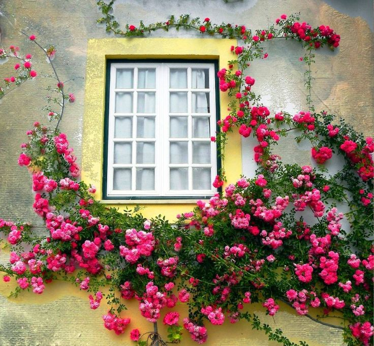 Lovely window - Coruche, Ribatejo #Portugal #PortugalFlowerPower