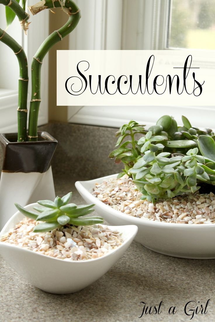 Succulents....tips on the soil and how to plant them and keep them alive.