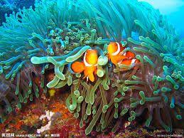 """Képtalálat a következőre: """"coral reef"""""""
