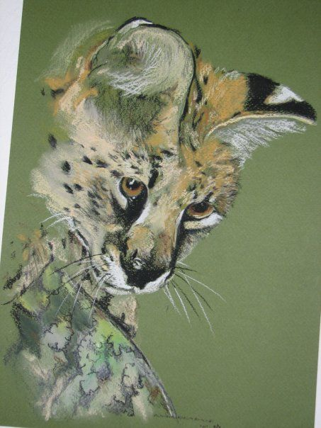 African Serval - pastel on paper