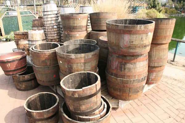 Tonneaux pour cultiver les pommes de terres dedans