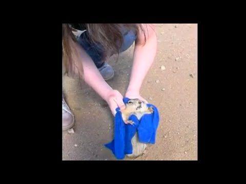よく見つけた!【危機一髪 女性がリスを救助】砂漠の道路の真ん中で穴にハマって慌てているリスを助けてる映像