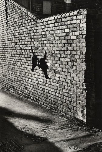 Josef Koudelka  Animal