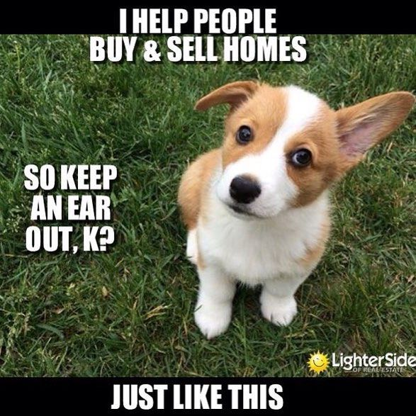 Happy Sunday everyone and don't forget to give us a call for all of your Real Estate needs! #teamsusca #Sunday #dog #instalove