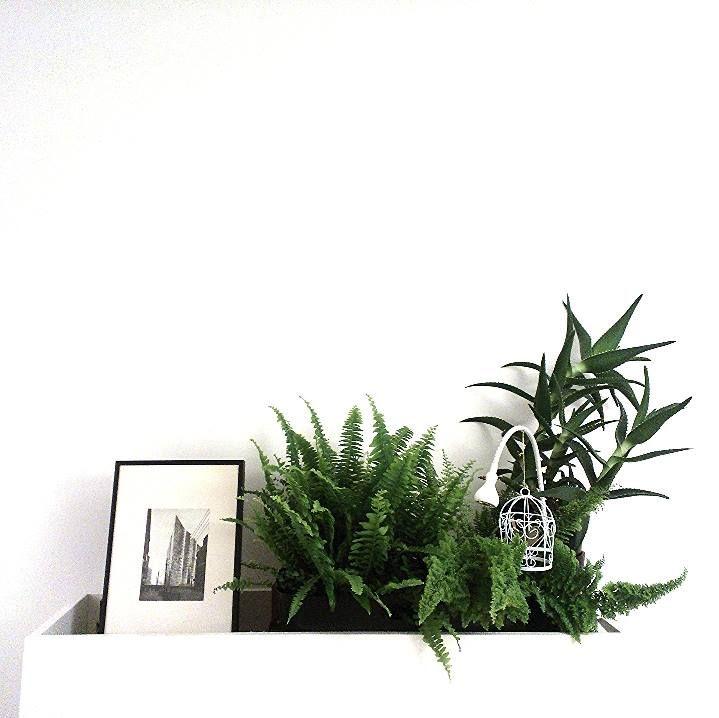 Fern&Aloe