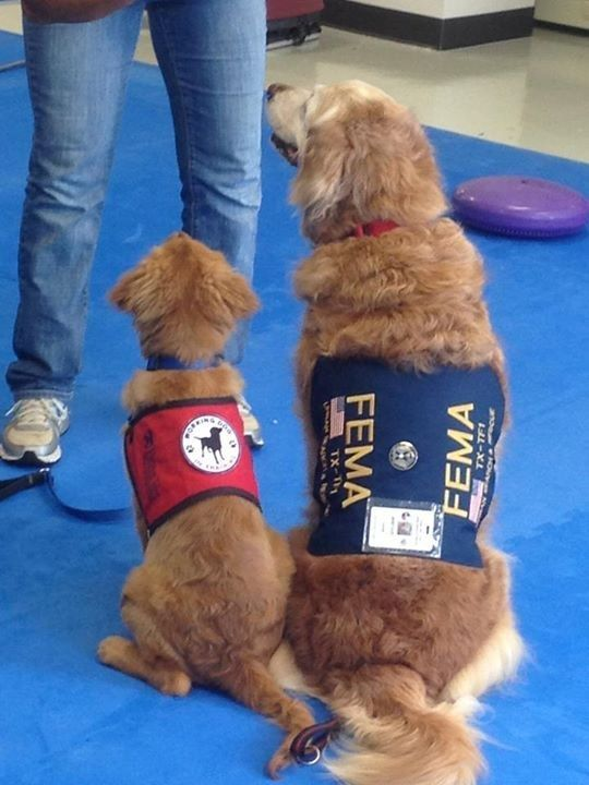 """""""I was very honored that they were naming a puppy after Bretagne,"""" Corliss said. """"A female golden retriever, so they said naturally my Bretagne came to mind."""""""
