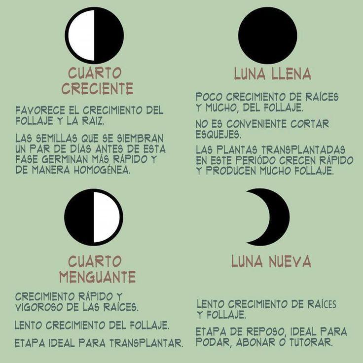 Las fases de la luna en el Huerto