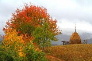 Marvelous autumn colors