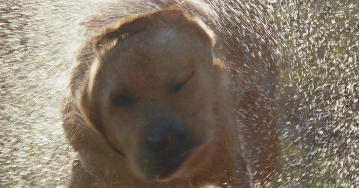 Remedio para los puntos calientes de un perro. La irritación en la piel de tu perro puede desarrollar un punto caliente en caso de que lama o muerda el área. Las mordidas de pulgas, las garrapatas y las alergias se encuentran entre las causas de la irritación inicial provocando que el perro se muerda y se rasque para sentir alivio. Por desgracia, sus esfuerzos a menudo empeoran la situación, ...