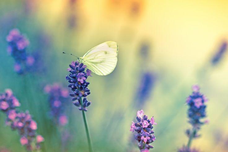 Czwartkowe zamyślenie... http://www.fototapeta24.pl/      #fototapeta   #fototapeta24pl #dream   #motyl #summer