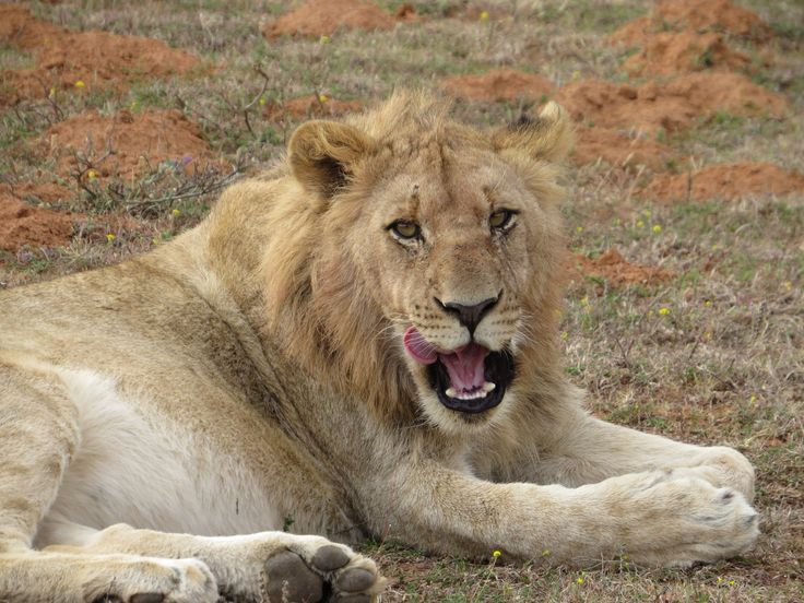 @Sham Wari Safari