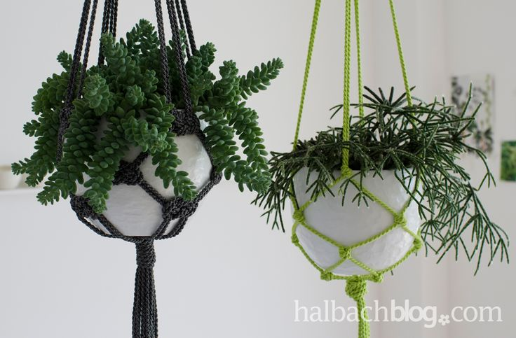 die besten 25 ampelpflanzen ideen auf pinterest pflanzen ampel makramee ampel anleitung und. Black Bedroom Furniture Sets. Home Design Ideas
