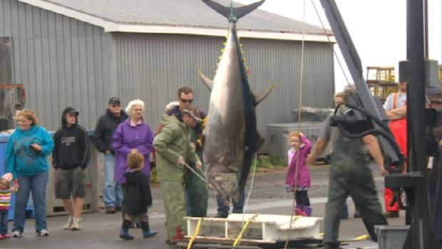 Atlantic Bluefin Tuna quotas see first increase in 24 years