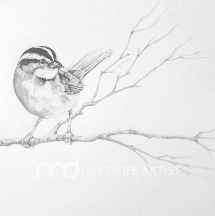 Gallery – Madison Drinkall – Wildlife Artist