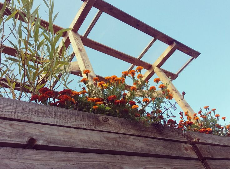Sunny rustic terrace made of pallets 🌞❤