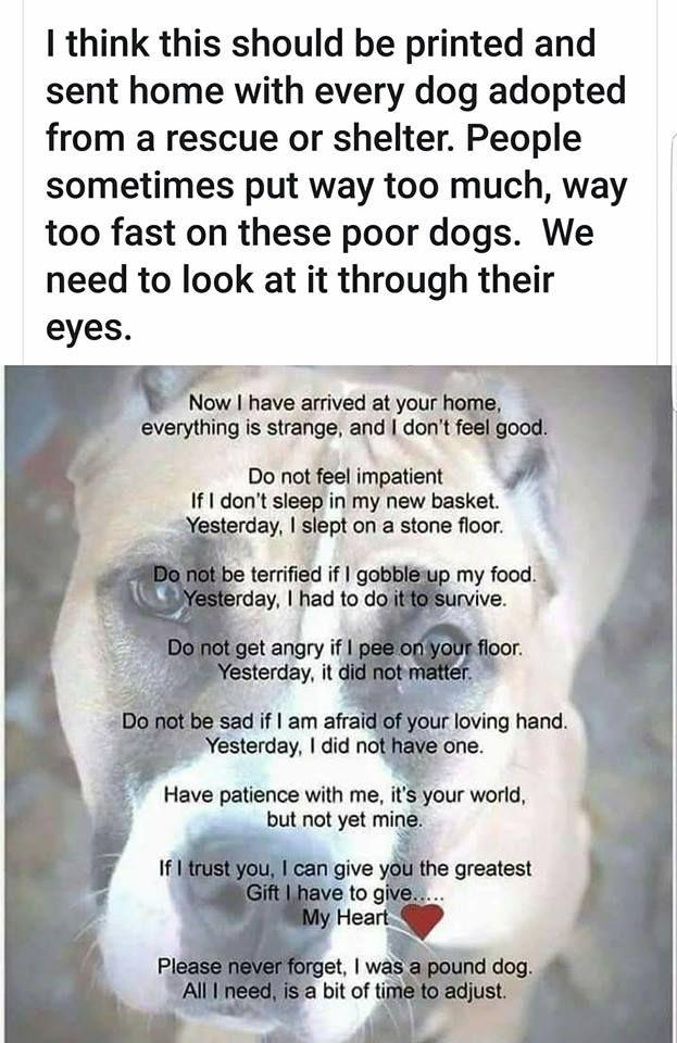Shelter Dog Mojave Desert Animal Rescue Animal Welfare Pinterest Inspiration Dory Patton If I Think About U I Think About Love