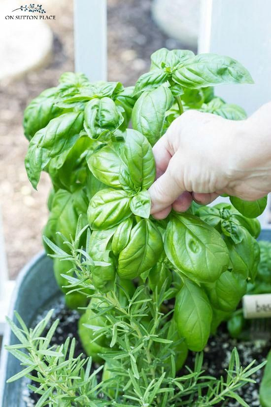 Food Service Tips #FoodTipsToGetPregnantEasily Key: 2922263467 #GardeningTipsInH…