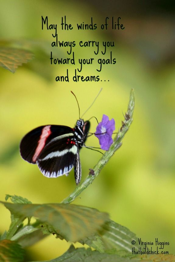 May the winds of life always carry you toward your goals ...