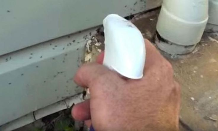Avec ce mélange naturel, il se débarrasse des fourmis autour de sa maison!