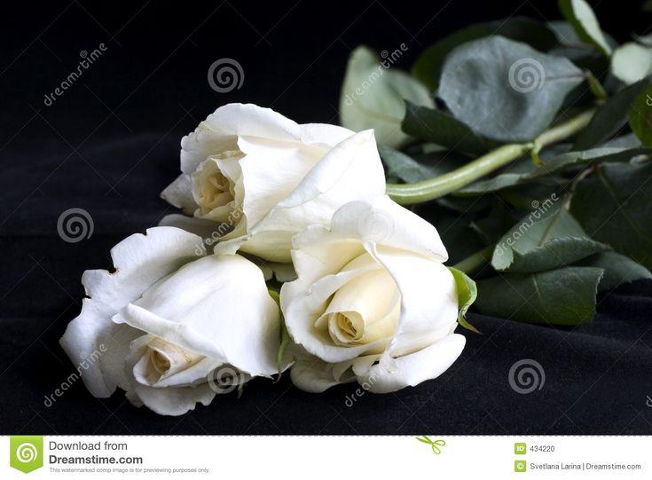 Rosas Blancas Para Protector De Pantalla En Widescreen 10 HD Wallpapers