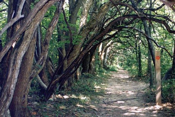 Travel | Ohio | Nature | Tree Tunnel | Park | Bucket List